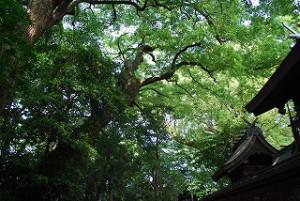神社さんの深緑パワー