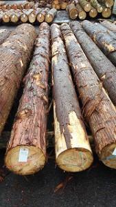 木材卸売り市場