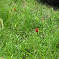 雑草の中の花
