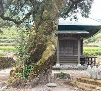 ご先祖様の墓参り