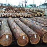 材木市場にて構造丸太梁