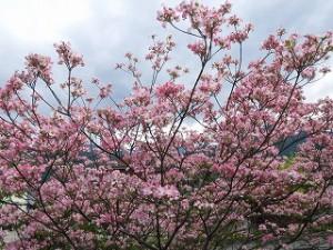 満開に咲く花