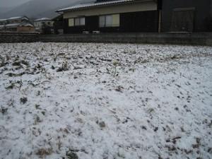 夕べから積雪