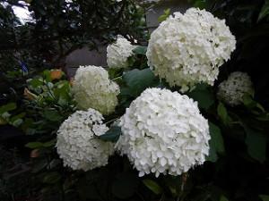 梅雨時期の草花