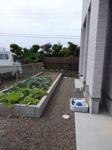 家庭菜園:ズッキーニ