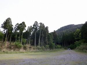 山はイイですよ~~クローバー 目で森の緑を眺めていると 身体が徐々にリラックスしてくることを 感じとれますし・・・クローバー