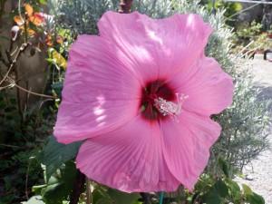 大きな花びら